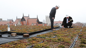 On Searle's roof garden (Photo by Dan Dry)
